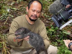 Hallan nuevas especies de zarigüeya pigmea y de rata gigante en Indonesia