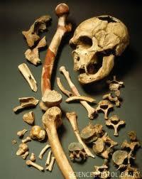 Descubren un resto óseo neandertal en el Alto Valle del Jarama