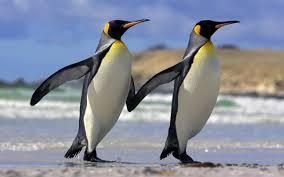 Pingüinos en su compleja actividad.
